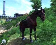 Plugin für Oblivon - für den Pferdenarren
