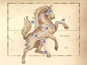 Oblivon Astrologie - Sternzeichen: Das Schlachtross